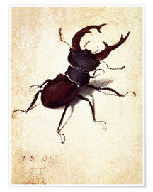Poster Premium Stag beetle