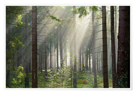 Poster Premium Sun rays in the forest