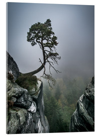 Stampa su vetro acrilico  Lonely Tree on the Brink - Andreas Wonisch
