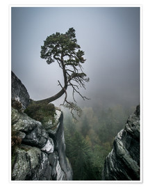 Poster Premium Lonely Tree on the Brink