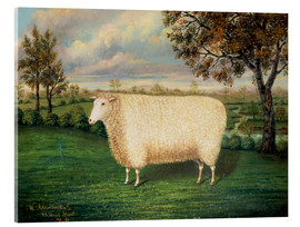 Vetro acrilico  A Prize Sheep of the Old Lincoln Breed, 1835 - W. Adamson