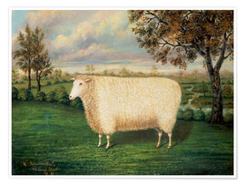 Poster  A Prize Sheep of the Old Lincoln Breed, 1835 - W. Adamson