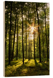 Stampa su legno  Forest in Sunset - Renate Knapp