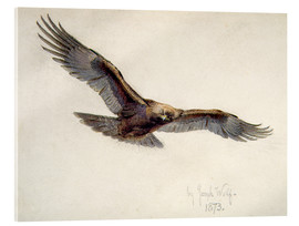 Joseph Wolf - Eagle in flight, 1873