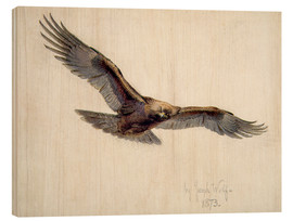 Legno  Eagle in flight, 1873 - Joseph Wolf