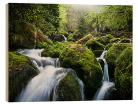 Stampa su legno  Wild Creek in German Black Forest - Andreas Wonisch