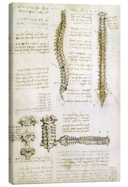 Tela  The spine - Leonardo da Vinci