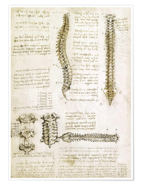 Poster  The spine - Leonardo da Vinci
