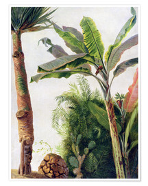 Poster Premium  Banana Tree - Frederic Edwin Church