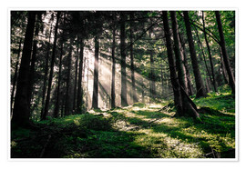 Poster Premium Light rays in the forest