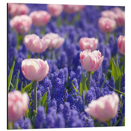 Stampa su alluminio  meadow of tulips - pixelliebe