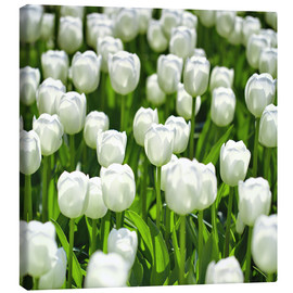 Stampa su tela  Meadow of tulips - pixelliebe