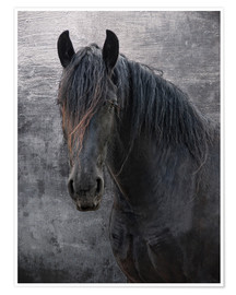 Poster Premium Horse with no name
