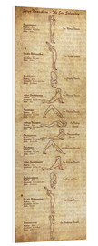 Forex  Surya Namaskara The Sun Salutation(vertical) Yoga Poster - Sharma Satyakam