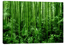 Tela  bamboo forest - GUGIGEI