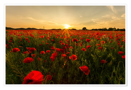 Poster Premium  Field of poppies - Oliver Henze