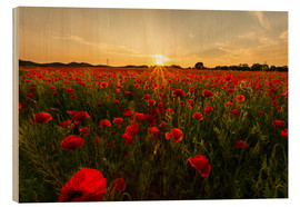 Oliver Henze - Field of poppies