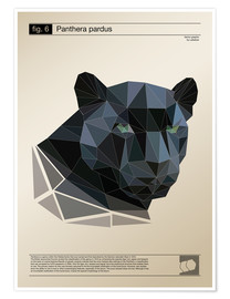 Poster Premium  fig6 Polygonpanther Poster - Labelizer