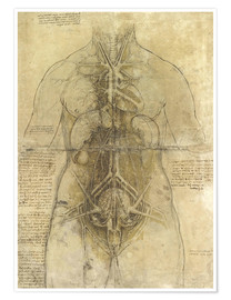 Poster Anatomical study
