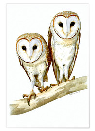 Poster  Owls