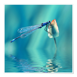 Poster  Dragonfly with Reflection - Atteloi