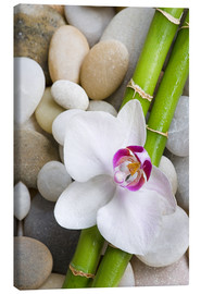 Stampa su tela  Bamboo and orchid - Andrea Haase Foto