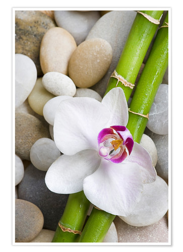 Poster Premium Bamboo and orchid