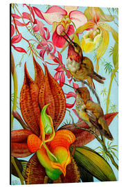 Stampa su alluminio  Exotic birds on orchids