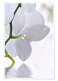 Poster  Orchid - Atteloi