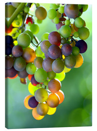 Stampa su tela  wine grapes - GUGIGEI