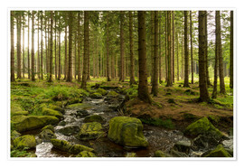 Poster Premium forest with creek