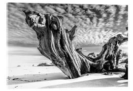 Vetro acrilico  Old Tree Root on the Beach (monochrome) - Sascha Kilmer
