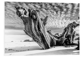Stampa su schiuma dura  Old Tree Root on the Beach (monochrome) - Sascha Kilmer