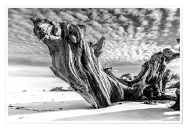 Poster Premium  Old Tree Root on the Beach (monochrome) - Sascha Kilmer