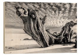 Legno  Old Tree Root on the Beach (monochrome) - Sascha Kilmer