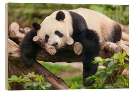 Legno  Giant panda sleeping - Jan Christopher Becke