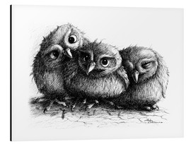 Stampa su alluminio  Three young owls - owlets - Stefan Kahlhammer