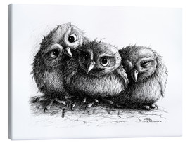 Stampa su tela  Three young owls - owlets - Stefan Kahlhammer