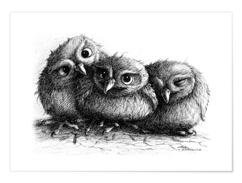 Poster Premium Three young owls - owlets