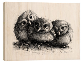 Stampa su legno  Three young owls - owlets - Stefan Kahlhammer