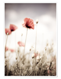 Poster Premium Red Poppy Flowers