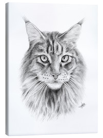 Tela  Maine Coon Cat - Christian Klute