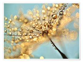 Poster Premium Dandelion umbrellas with gold drops