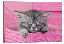 Stampa su alluminio  Sleeping kitten - Greg Cuddiford