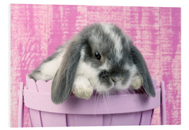 Forex  Rabbit in a flower pot - Greg Cuddiford