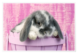 Poster  Rabbit in a flower pot - Greg Cuddiford