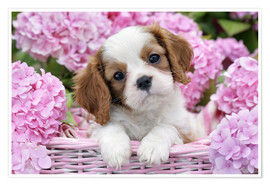 Poster  Pup in Pink Flowers - Greg Cuddiford