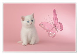 Poster Premium Kitten with Pink Butterfly