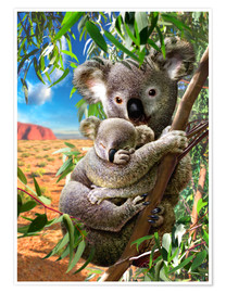Poster Premium  Koala and cub - Adrian Chesterman