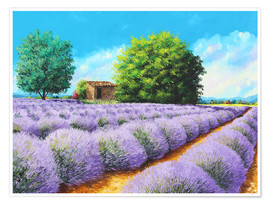 Poster Premium  Lavender Lines - Jean-Marc Janiaczyk